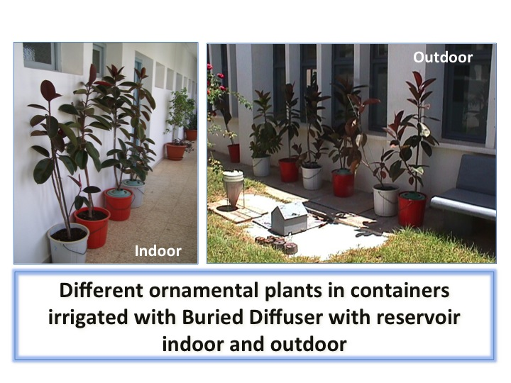 Container Plants Diffuser