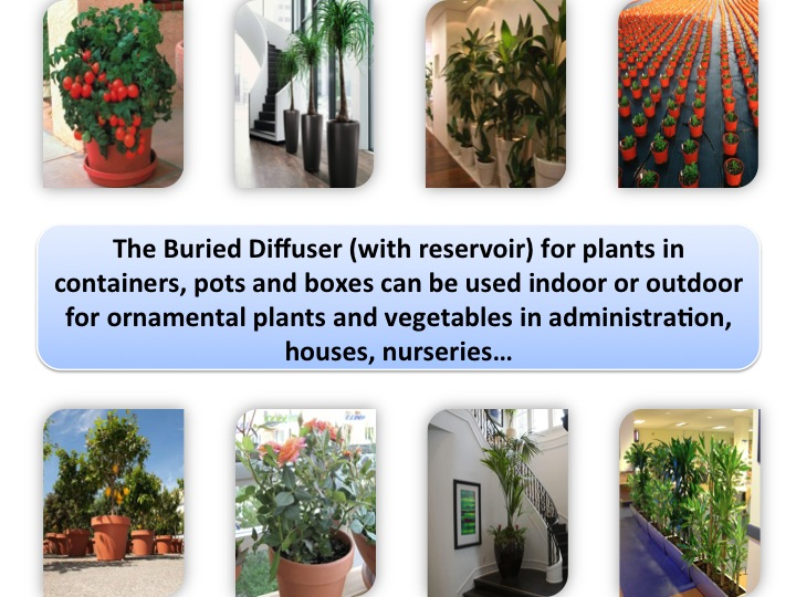 The Buried Diffuser with reservoir for the plants in containers irrigation